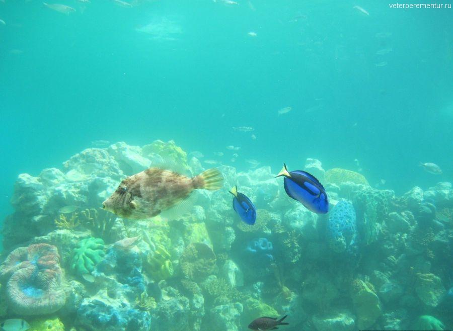 Sea Park, Кушадасы, рыбы в бассейне