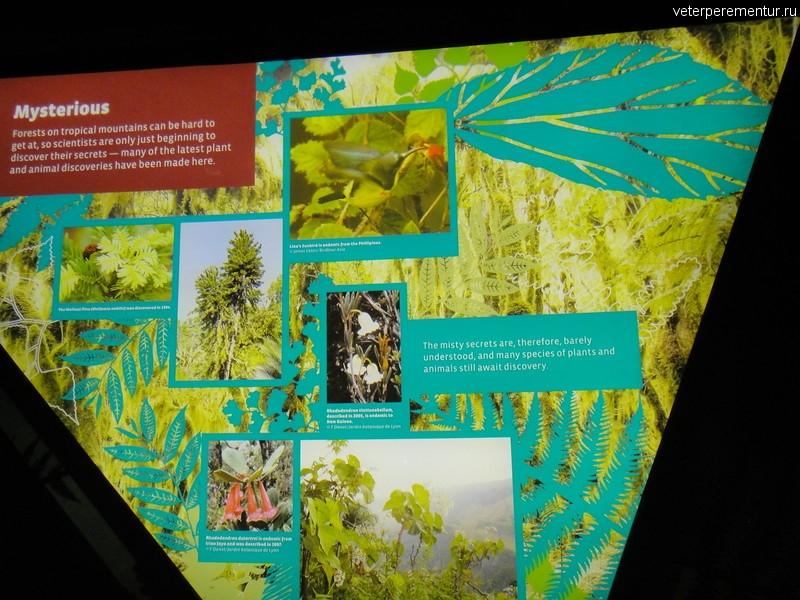 Описание высокогорного тропического леса,Cloud Forest, Сингапур
