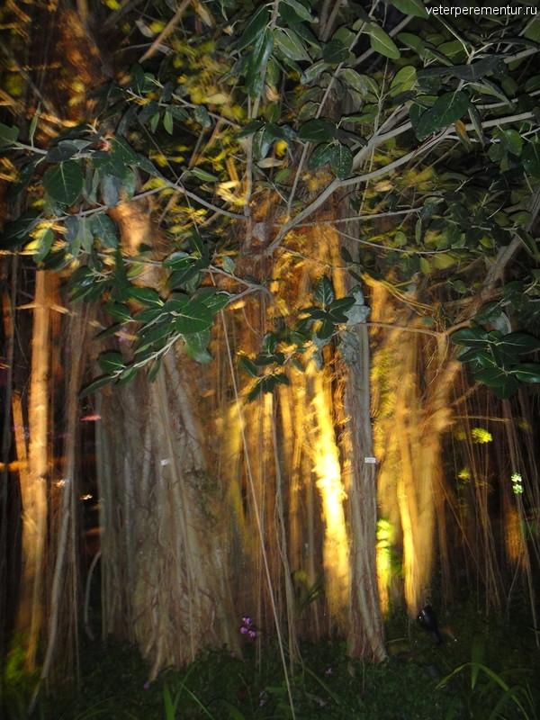 Дерево с вечерней подсветкой, Сады у Залива, Сингапур