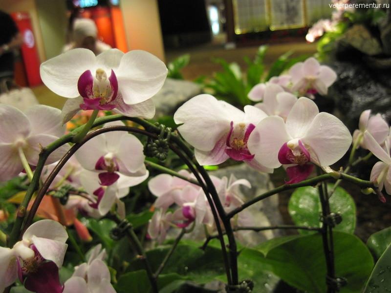 орхидеи, ORCHID GARDEN & KOI POND , аэропорт Чанги, Сингапур