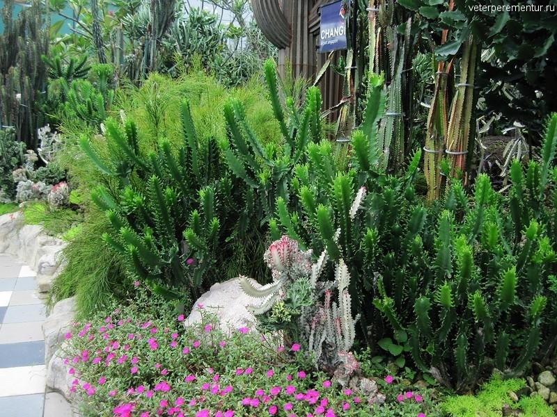 Сад кактусов в аэропорту Чанги, Сингапур