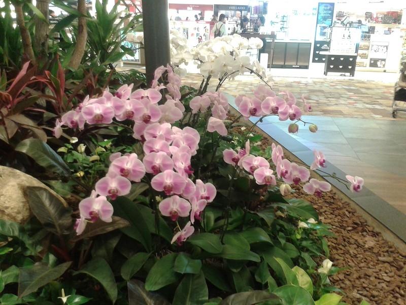 Орхидеи, Чанги, Сингапур