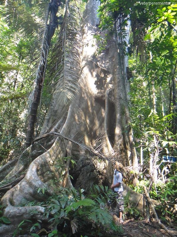 Тропический лес рядом с храмом Тигра, Таиланд, Краби