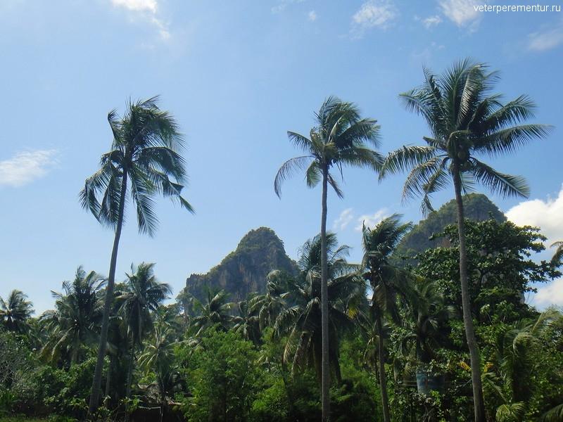 Рейли, Таиланд, пальмы и горы