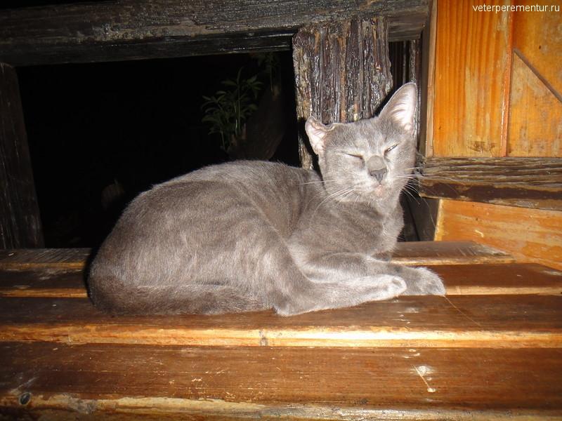 Кошка, Ао Нанг, Таиланд