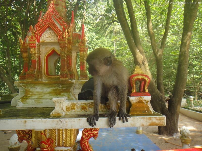обезьяны на пляже Ао Нанг, Таиланд