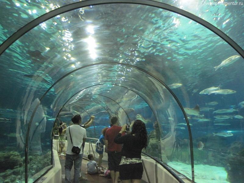 Подводный тоннель в океанариуме Барселоны