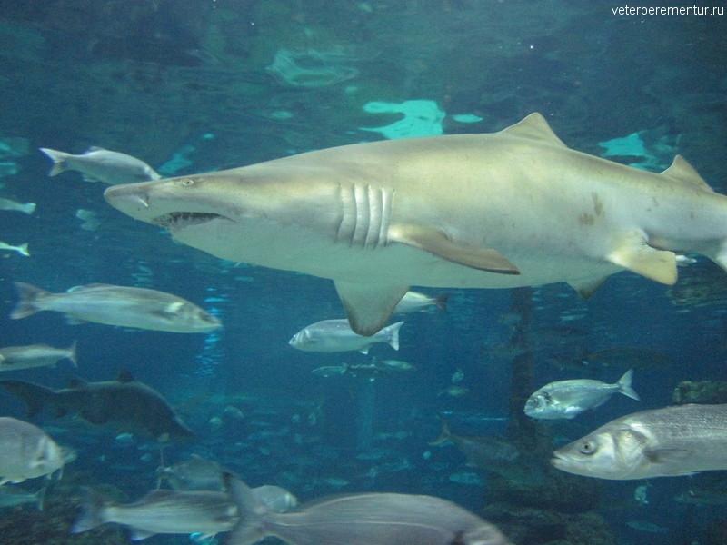 Акула в океанариуме Барселоны