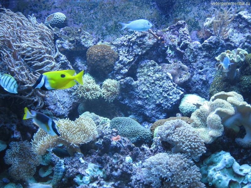 Рыбы в океанариуме Барселоны