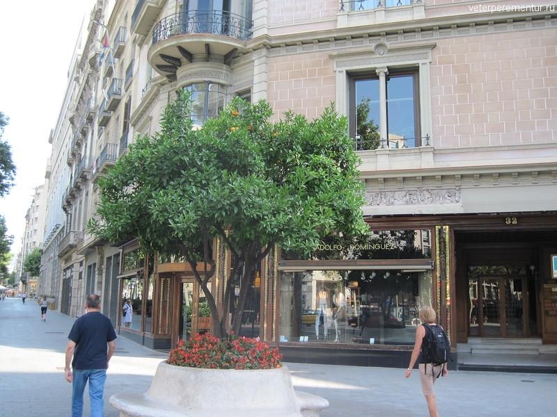 Апельсиновое дерево на улице Барселоны