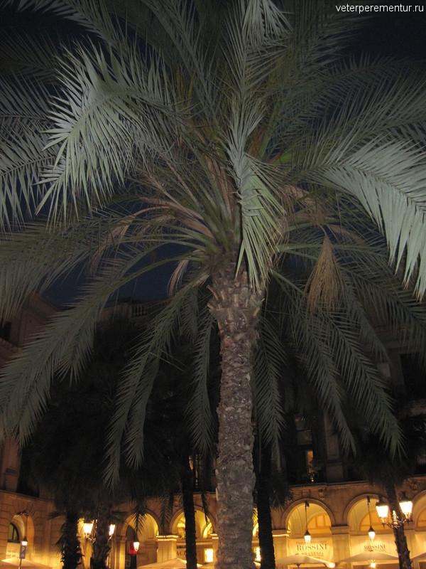 Пальма в Барселоне, Испания