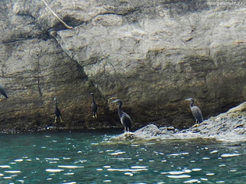 Птицы на скалах, Рейли, Таиланд