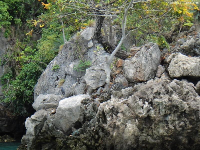 Деревья на камнях, скалы рядом с Рейли