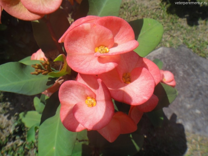 цветник на viewpoint Phi Phi