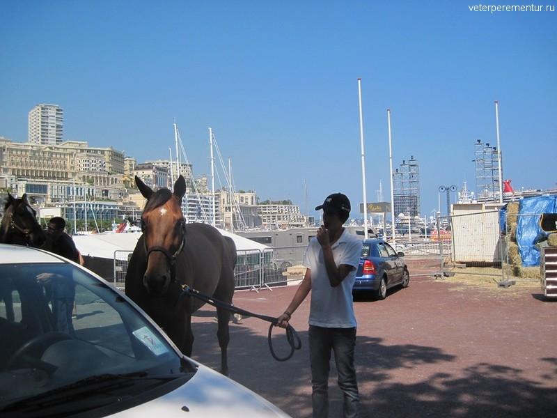 Скачки в Монако