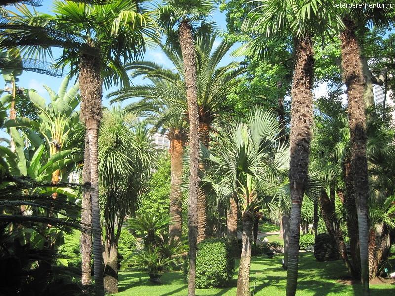 Пальмы в Монако