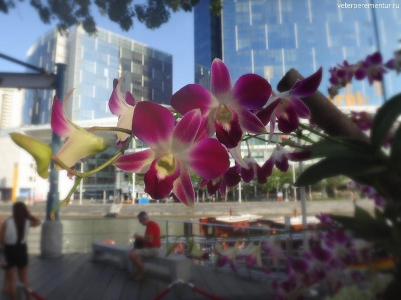 Орхидеи на набережной в Сингапуре
