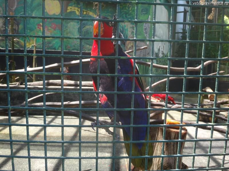 Попугаи на острове Сентоза