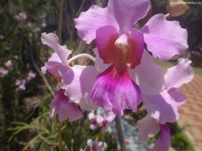 Орхидеи на острове Сентоза
