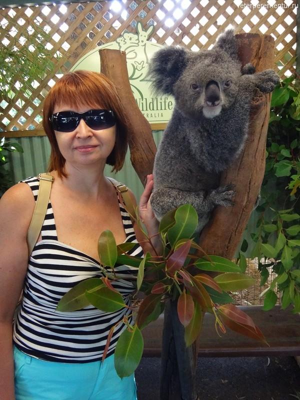 Я и коала, Австралия