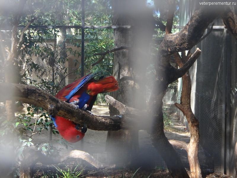 птицы в Featherdale Wildelife park, Австралия