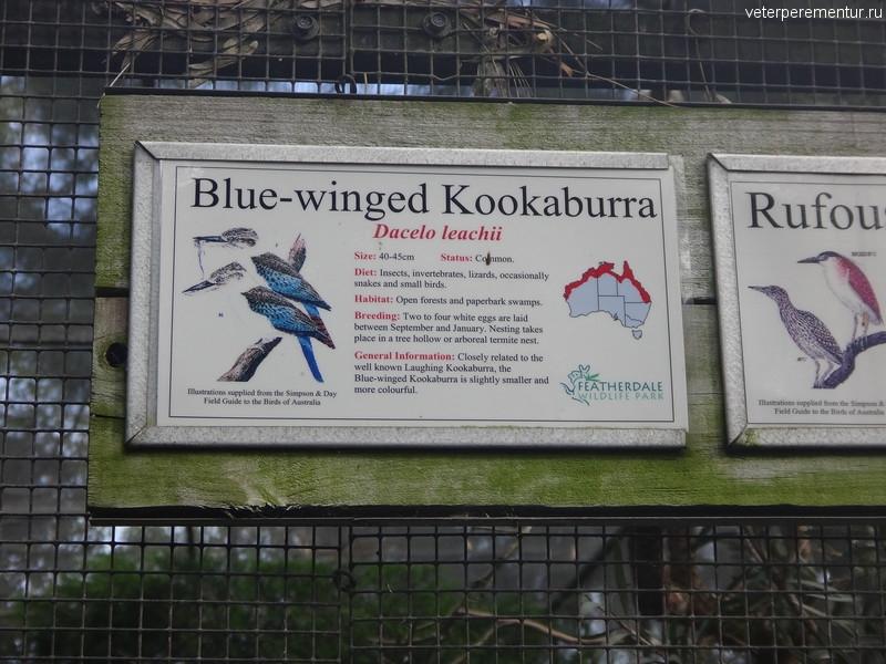 Кукабарра, Австралия