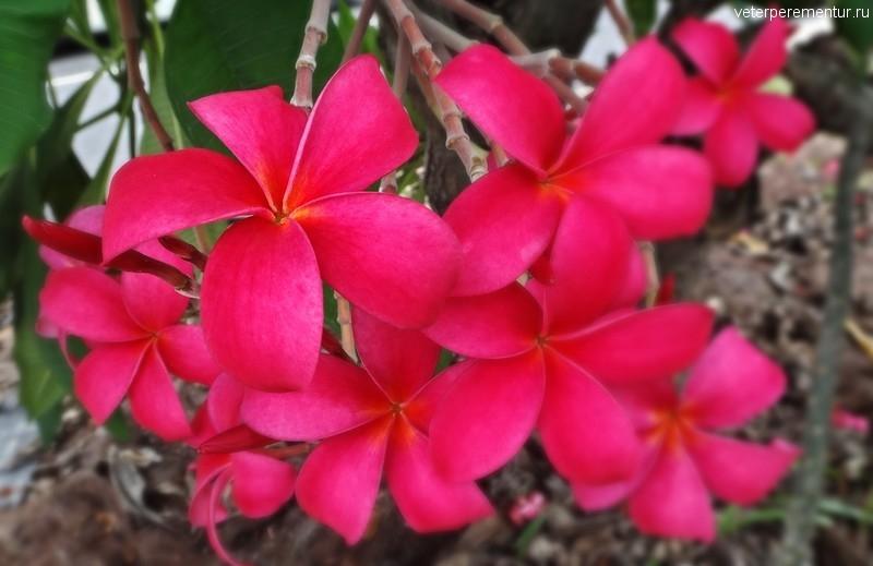 Цветы в Сингапуре