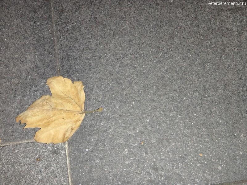 Желтый лист на улице Сиднея