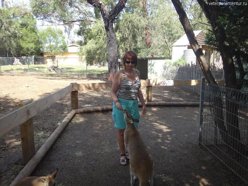 кормление кенгуру