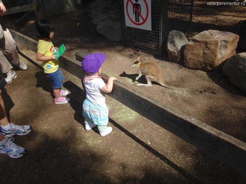 Дети смотрят на кенгуру