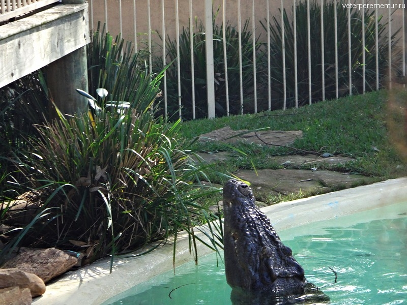 Крокодил, Австралия