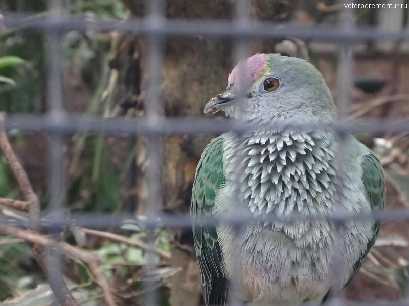птицы в зоопарке, Австралия