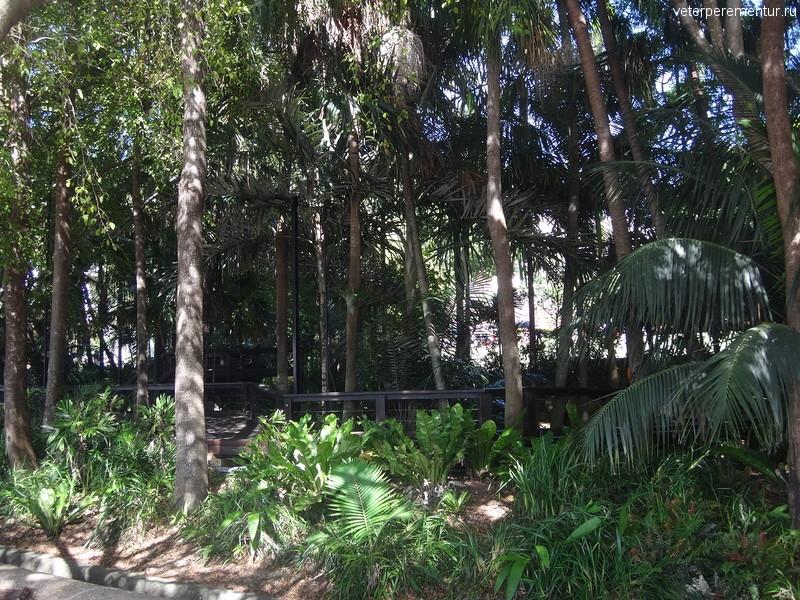 Брисбен (Brisbane), rain forest, вид с набережной