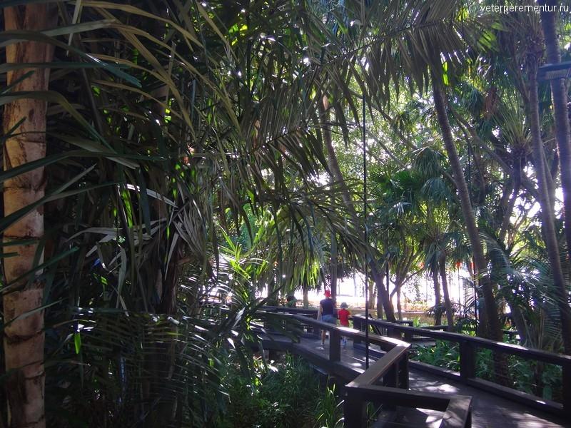 Брисбен (Brisbane), rain forest