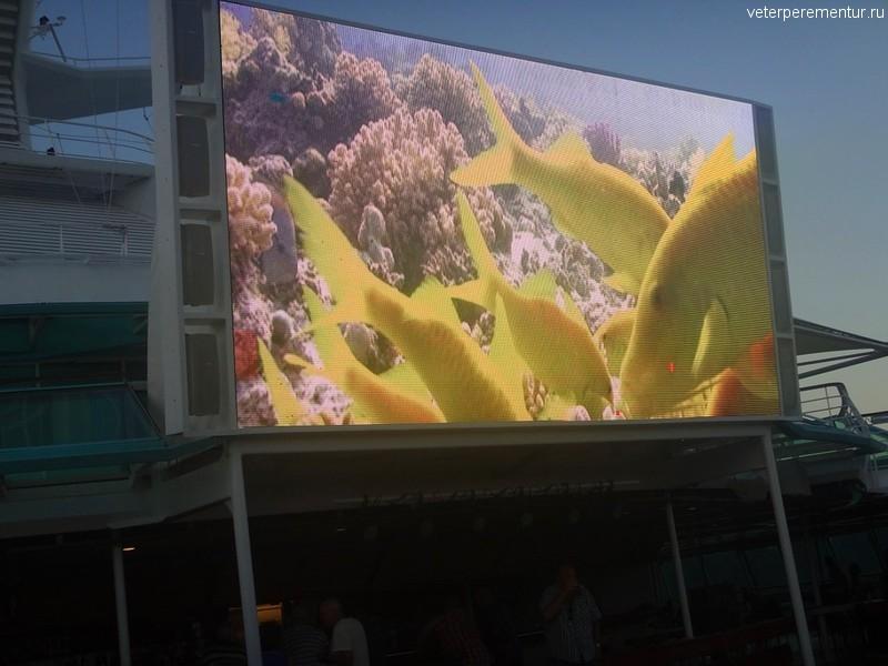 Rhapsody of the Seas, большой экран у бассейна
