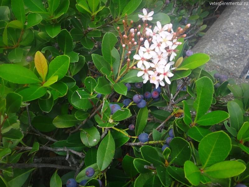 Брисбен (Brisbane), растения на улицах