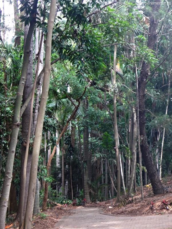 Ботанический сад Брисбена