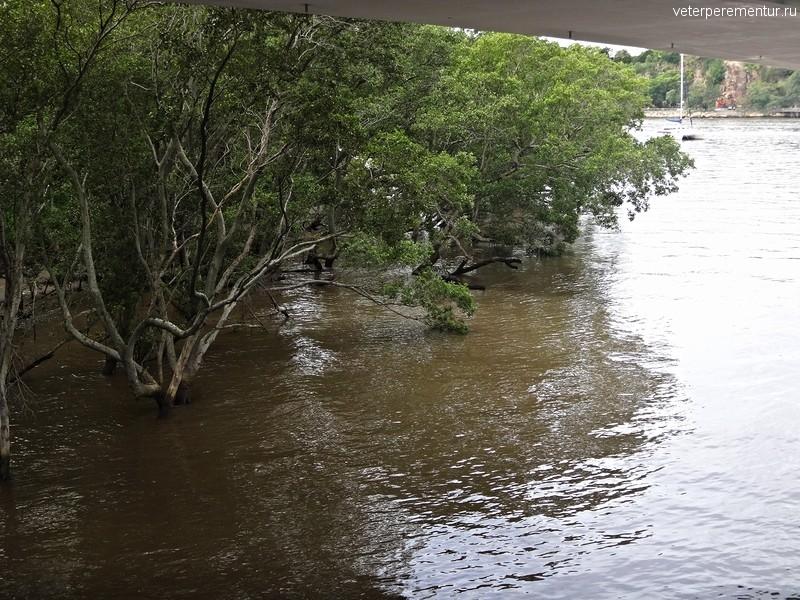 Брисбен, мангры на берегу реки