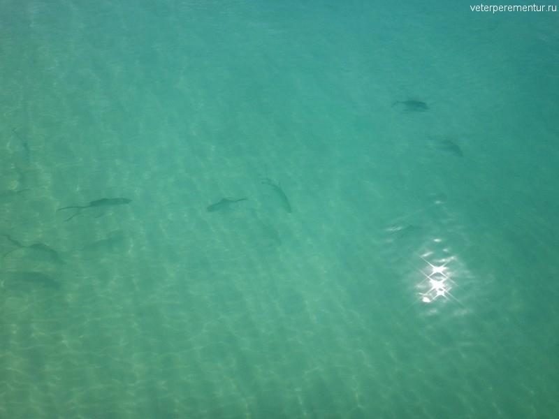 рыбы, национальный парк Whitsunday Islands