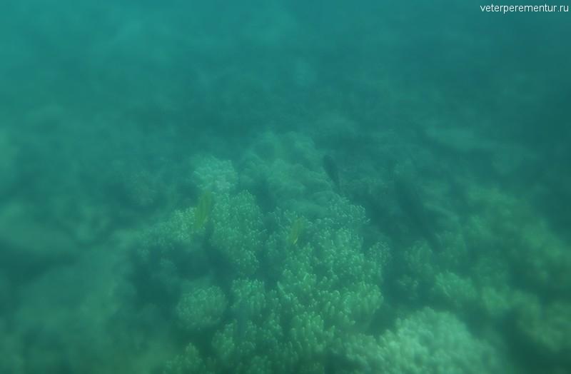Снорклинг в Австралии, внешняя часть Большого Барьерного рифа