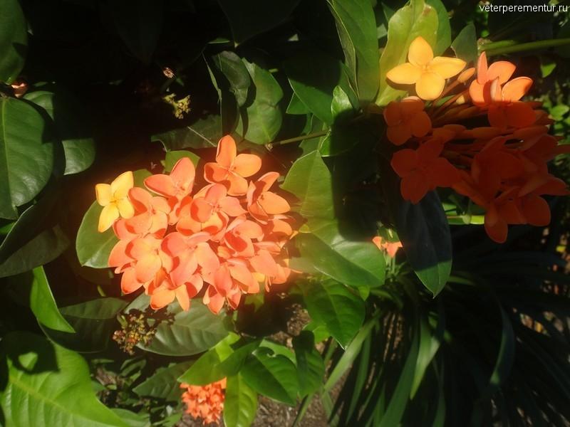 Растения на улицах Кэрнса