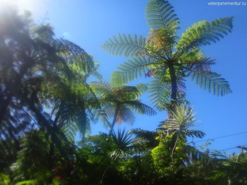 Пальмы в Куранде
