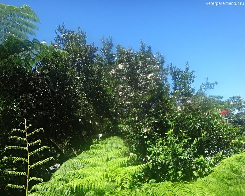 Тропический лес вокруг Куранды