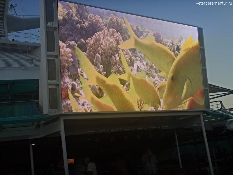 Рыбы Большого Барьерного рифа на экране Рапсодии