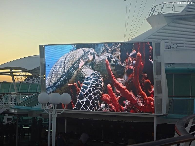 Виды Большого Барьерного рифа на экране Рапсодии