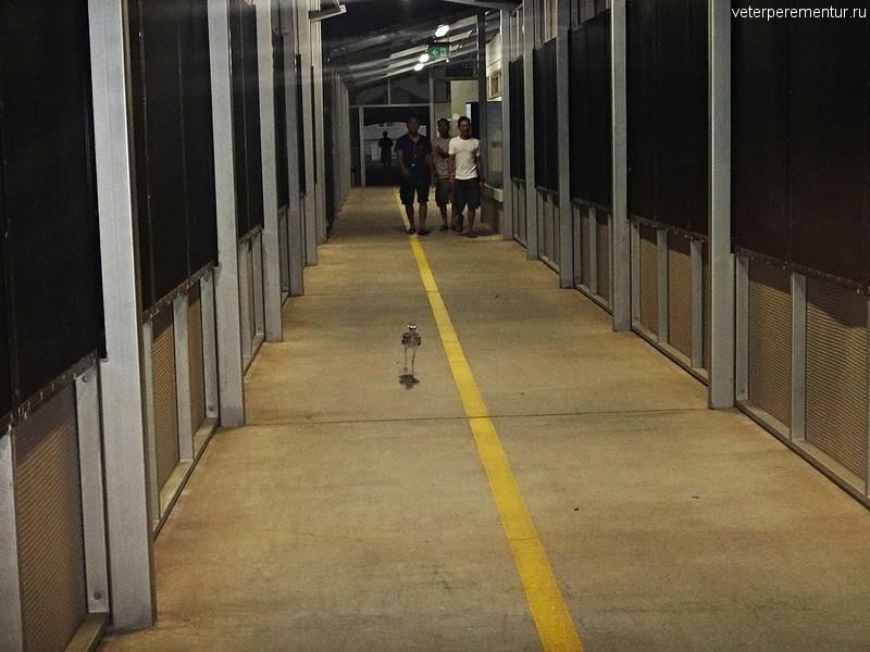 Птица в круизном терминале, Австралия, Дарвин