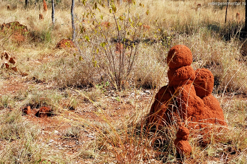 Termite Mounds. Elsey National Park, NT, Australia