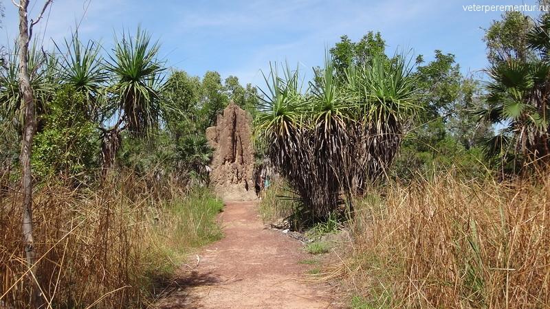 Термитник, Личфилд, Австралия