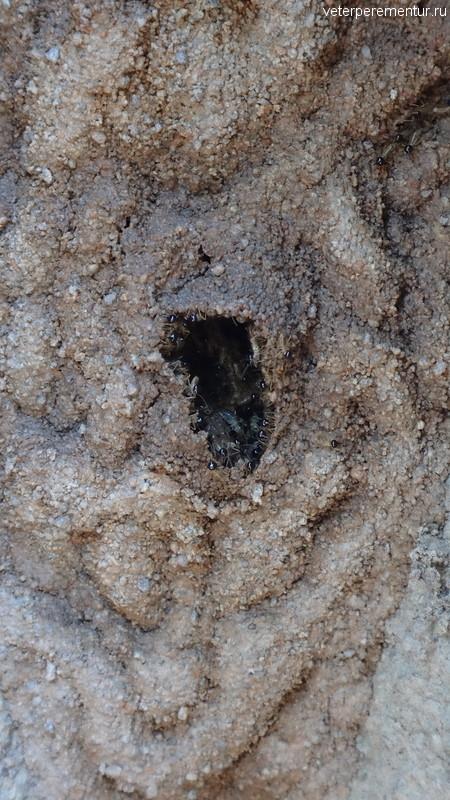 Термиты, Личфилд, Австралия