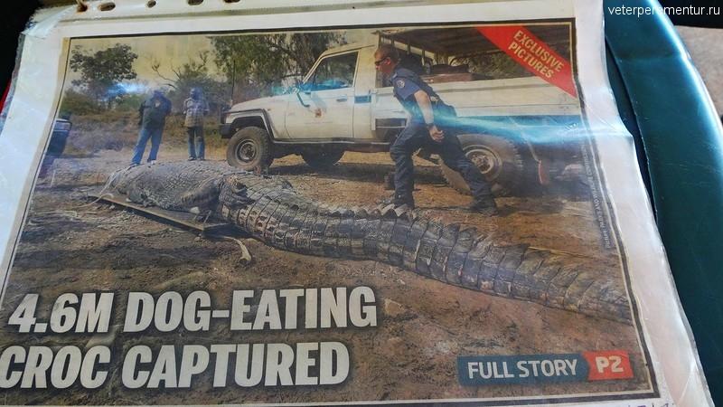 Фотографии гигантских крокодилов в газетах